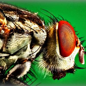 Bed Bug Epidemic Hits US